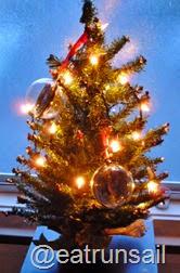 Dec 7 2014 Christmas trees 003