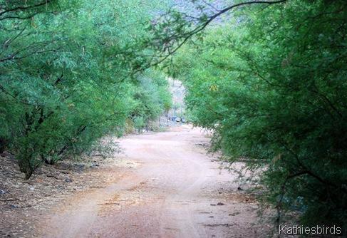 6. trail-kab