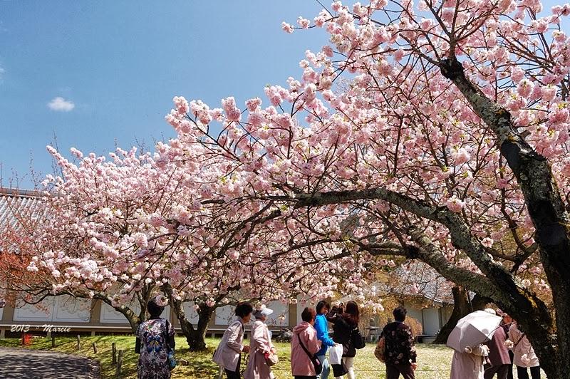 日本 京都 醍醐寺