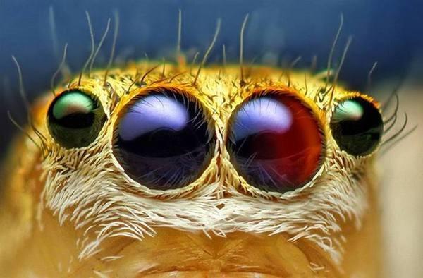 Macrofotografia mostra pequenos monstros vivendo entres 5