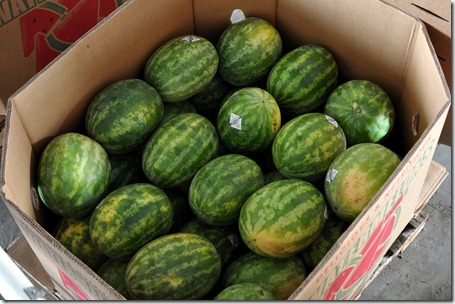watermelons 11 071211 (68)