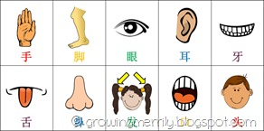 My Body Flash Cards - Chinese