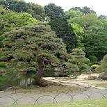 beautiful trees at Shinjuku Gyoen in Shinjuku, Tokyo, Japan
