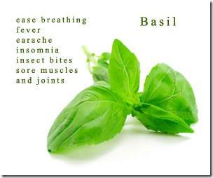 basil-front
