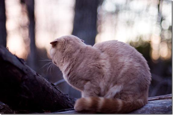 cat12-182