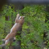Wildpark-PF_2012-04-29_1033.JPG