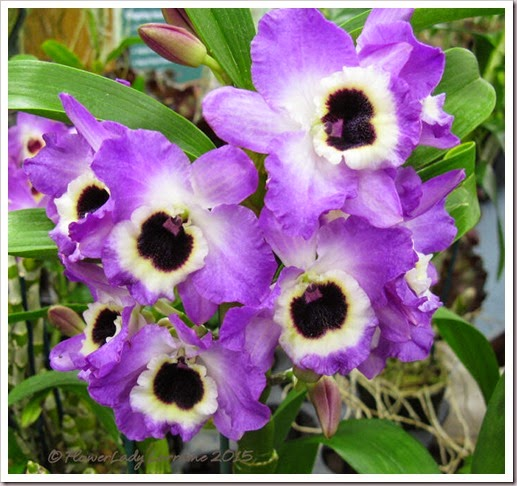 02-08-orchids5