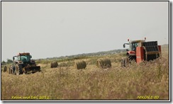 Titchwewll RSPB D50  12-08-2012 14-16-15