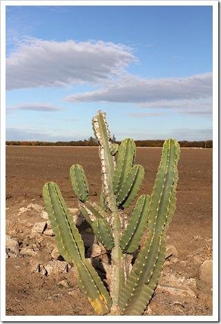 111117_lone_cactus_4