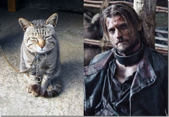cats-game-thrones-18