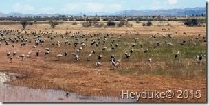 Whitewater Draw Wildlife Area and Lowell, AZ 009