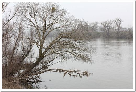110106_sacramento_river trees
