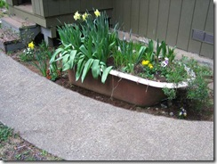 planting-flowers-1204-3