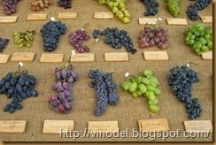 Лучшие сорта столового винограда