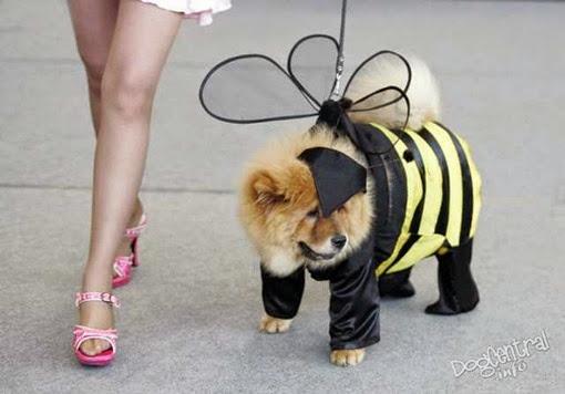 Собака в костюме пчелки