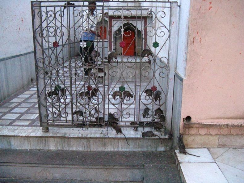 karni-mata-temple-10