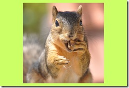 squirrel-nuts[1]