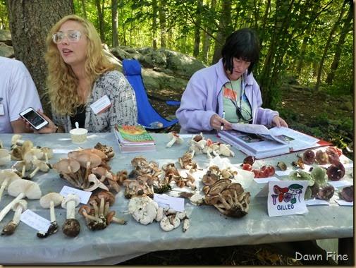 Mushroom festival_040