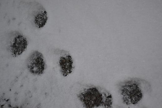 Cat prints - 2013