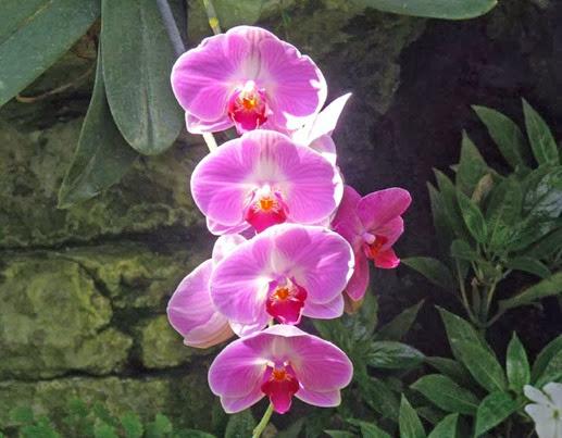 Opreyland Flower4