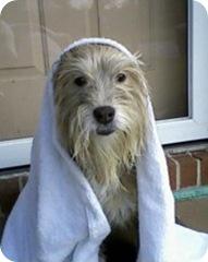jade with towel over head