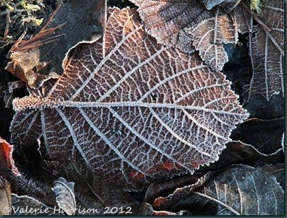 1-frosty-leaf