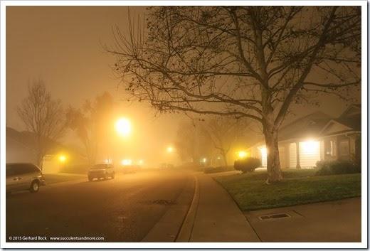 150123_fog_night7