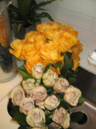 Here is a close-up of two different types of roses: Capriccio and Metallina.