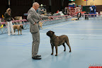 20130510-Bullmastiff-Worldcup-0809.jpg