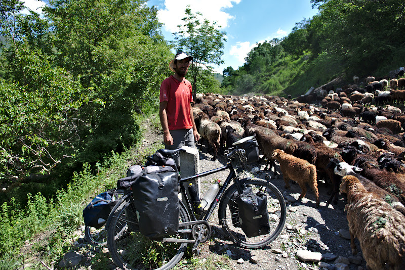 David, lat prin invaluire de turmele de oi.
