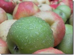 apple cider 01