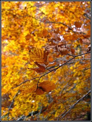 Lantz otoño 042
