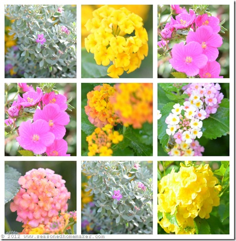 Lantana Collage