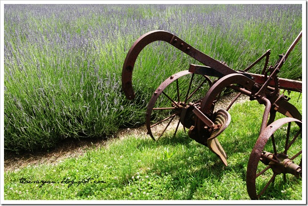 rusty farm implement lavendar bucks county pennsylvania
