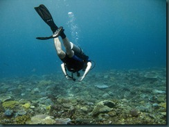 Octpous Diving_40