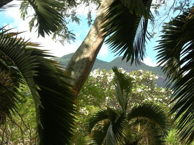 seychelles0_20070412_1245922050.jpg