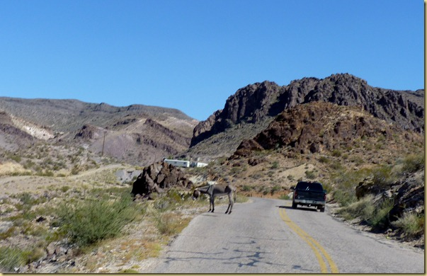 2012-09-27 -3- AZ, Oatman to Golden Valley -008