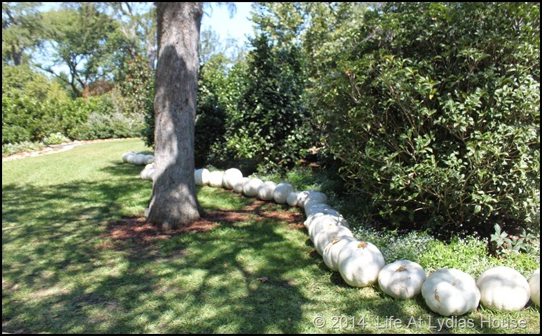 Dallas Arboretum - pumpkin festival-white garden 1