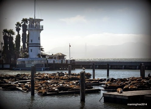 Sea Lions at the pier