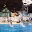 Boudewijn Seapark-102.JPG
