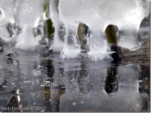 Barb Derksen Ice 2012  (28)