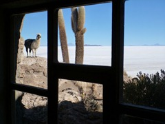 View from the refugio on Isla Incahuasi in the Salar de Uyuni.