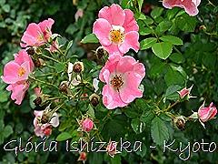 Glória Ishizaka -   Kyoto Botanical Garden 2012 - 110