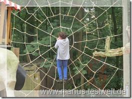 Meine Spinne im Netz