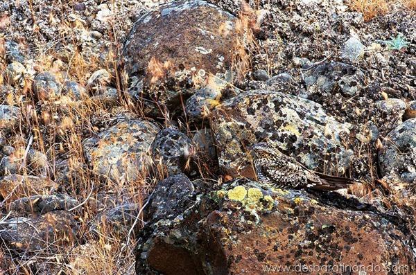 camuflagem-invisivel-animal-camouflage-photography-art-wolfe-desbaratinando (4)