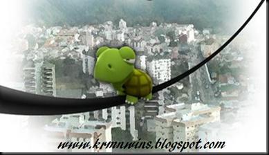 tortuga blog
