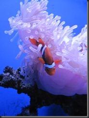 underwater 054