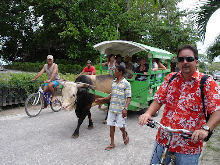Taxi Seychelles - caruta cu bou