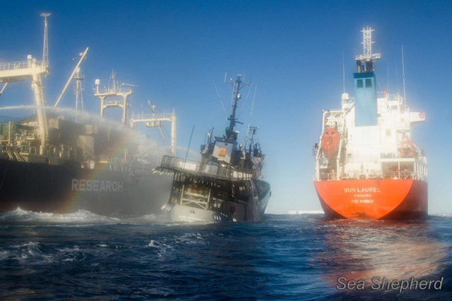 The Bob Barker lists to starboard after being rammed by the Japan whale poachers' factory ship, the Nisshin Maru, 25 February 2013. Photo: Sea Shepherd Conservation Society
