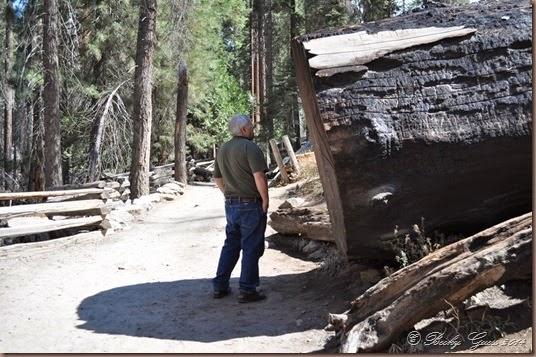 09-21-14 Yosemite 033